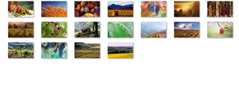 Harvest Time theme for Windows 7  on thanksgiving season