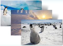 Antarctica theme