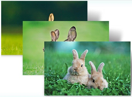 download year of the rabbit windows 7 themes