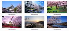 Cherry Blossom Themepack
