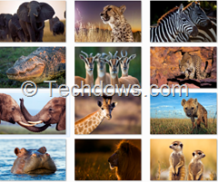 African wildlife themepack wallpapers